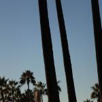 Palms, 12.11.13